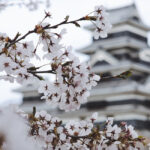 Japanese Culture Ten Things – a travel blog