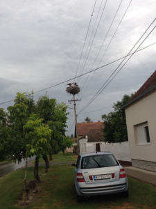 Serbia Stork
